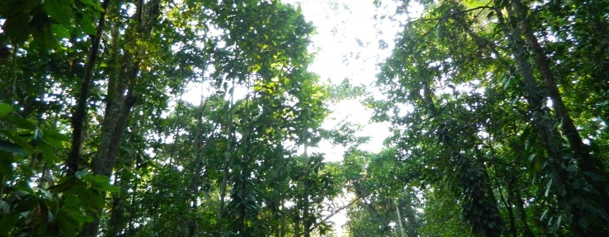Forest Resources of Assam