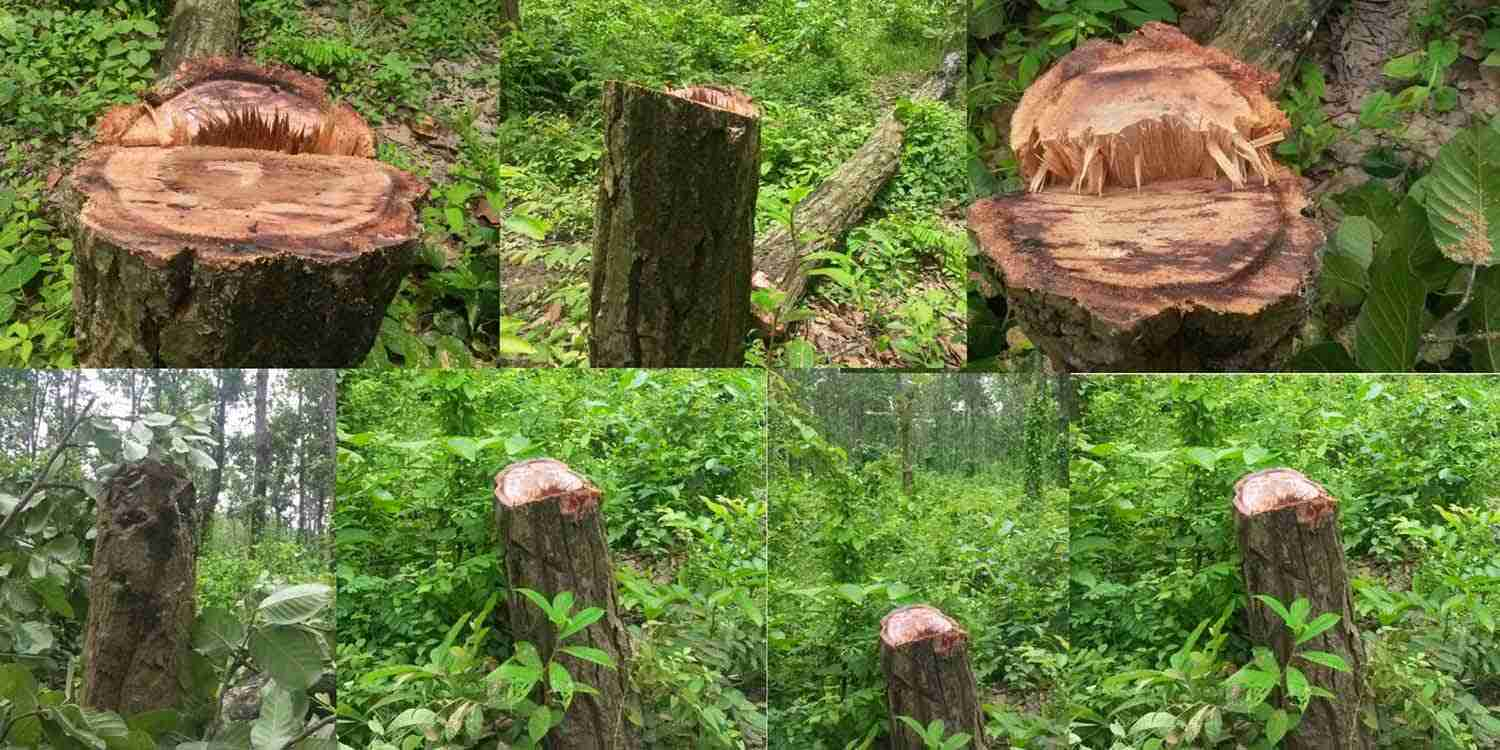 hazards of deforestation essay Essay writing guide deforestation and its impact on the environment extracts from this document what are the effects of deforestation.
